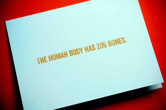 The Human Body has 206 bones