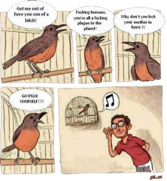 Angry Birds vs singing birds - if only we knew