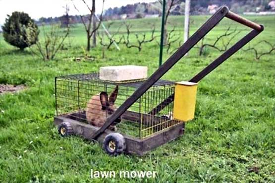 Eco Friendly Lawnmower