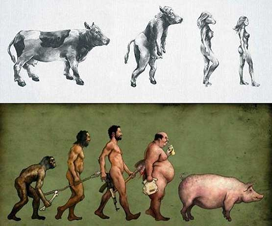 Evolution of the sexes