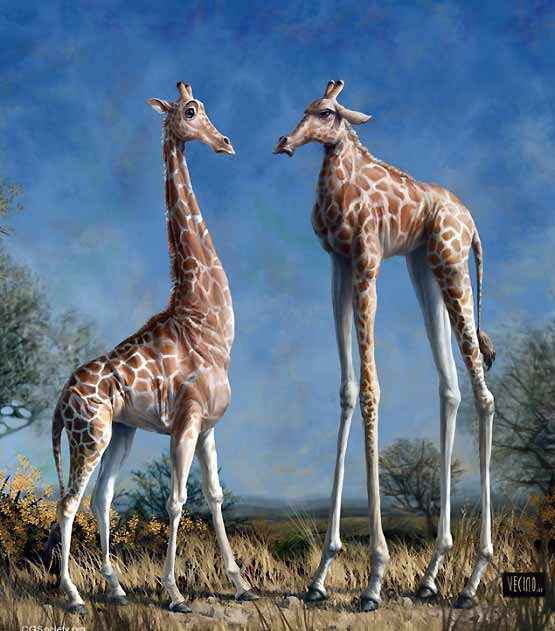 Giraffes could have evolved like this?